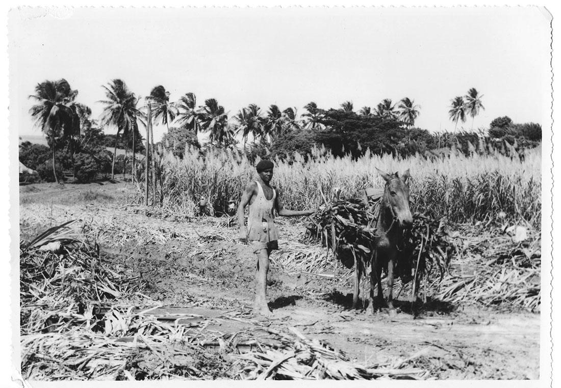 Martinique, 1953