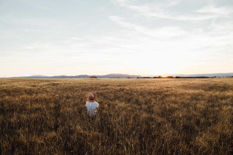 champs de blé au plateau de Valensole