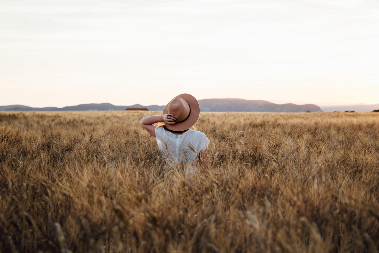 coucher de soleil champs de blé, plateau de Valensole