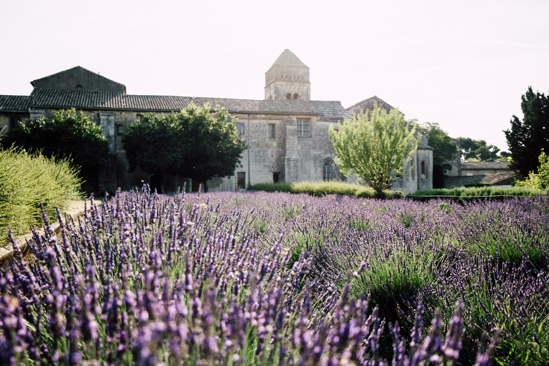 champs de lavande - Saint Paul de Mausole