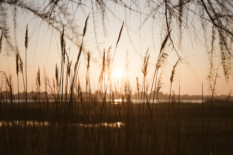 coucher de soleil sur la Camargue