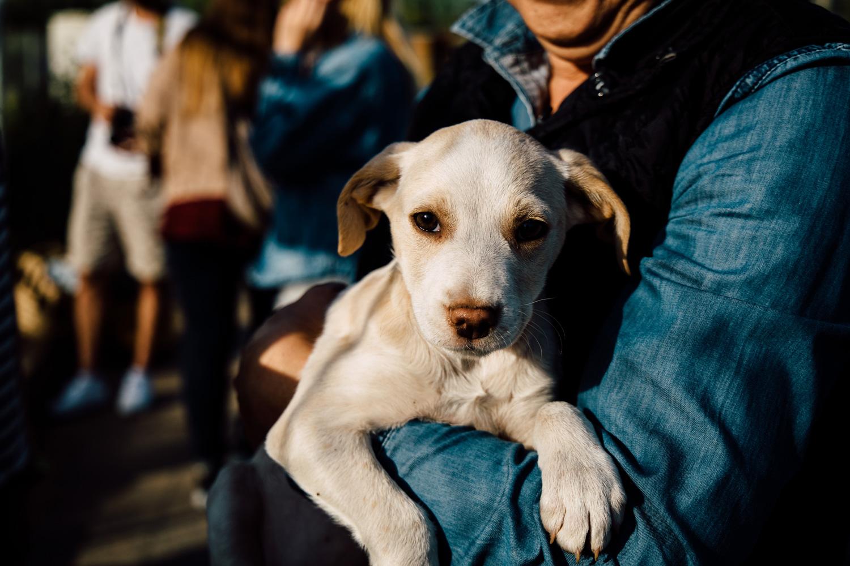 Association Navarino Pet Community