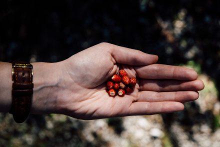 cueillir des fraises sauvages au lac de Blindsee