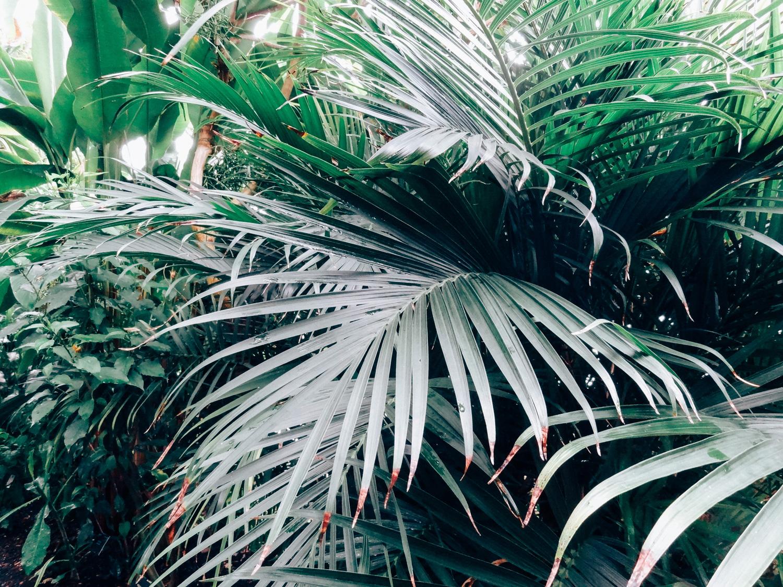 Voyager à Londres avec ouibus - Kew gardens - hellolaroux