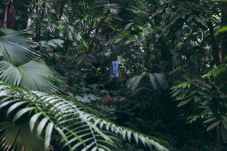 Amsterdam en 36 heures - city guide - Hortus botanicus