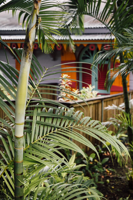 trouvez un écolodge en Guadeloupe