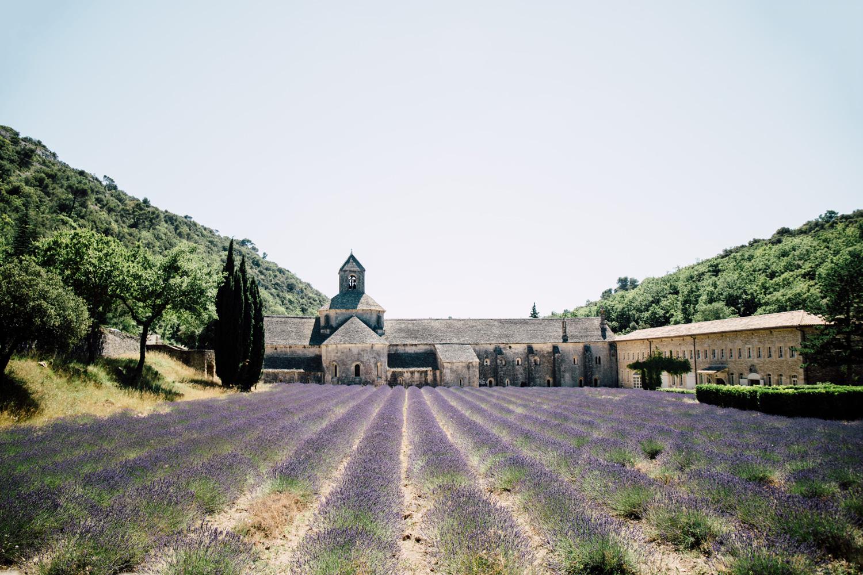 voir la lavande abbaye senanque vaucluse