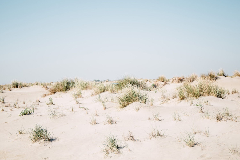 la camargue, plage dunes