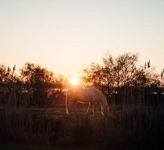 La Camargue — solaire, sauvage et un peu magique aussi