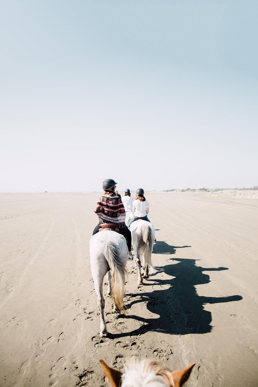 la camargue, balade equestre