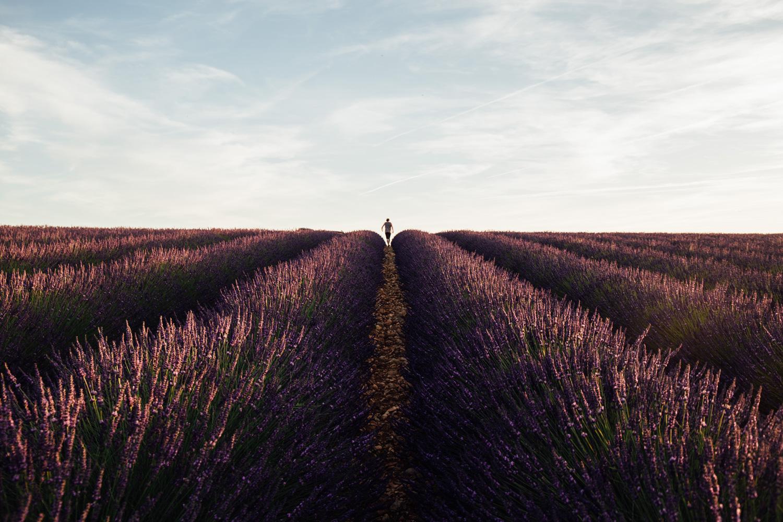 ou photographier la lavande de Provence ?