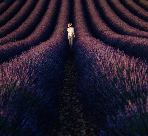 Où et quand photographier les champs de lavande en Provence ?