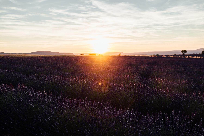 coucher de soleil champs de lavande, plateau de Valensole