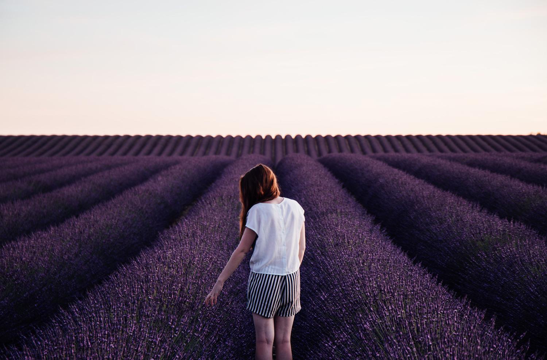 le plus beau champs de lavande de Provence, plateau de Valensole