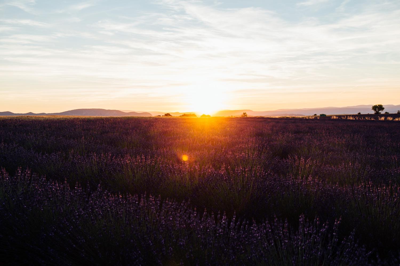 coucher de soleil sur la lavande de Provence