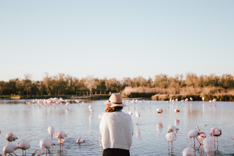 voir les flamants roses en Camargue au parc ornithologique
