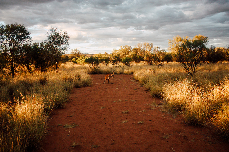 réflexion : être végétarien en voyage, expérience Australie