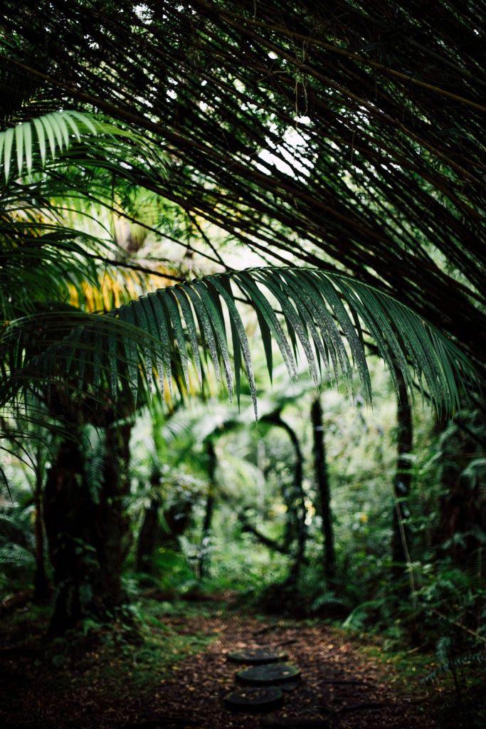 forêt primaire côte est La Réunion