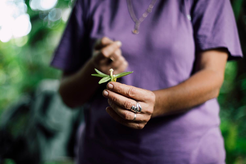 explication pollinisation de la vanille