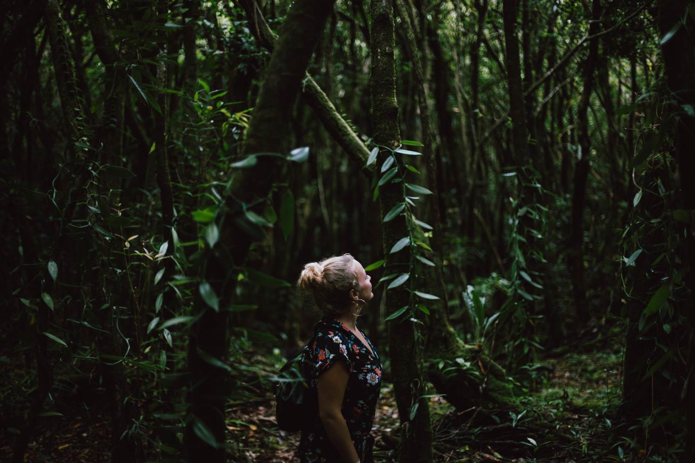 plantation de vanille La Réunion