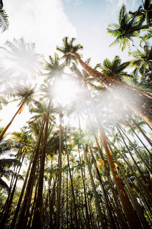 palmeraie Anse des cascades
