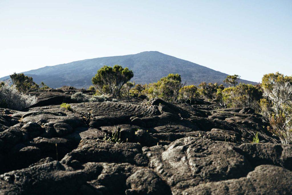 végétation volcan La Réunion