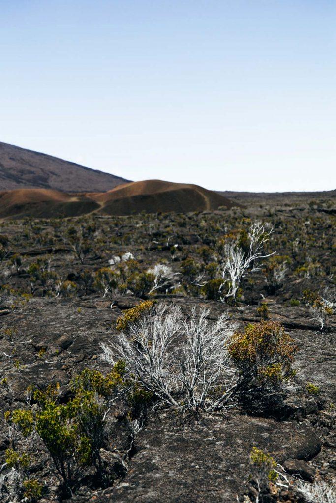 composition sol volcanique fertile