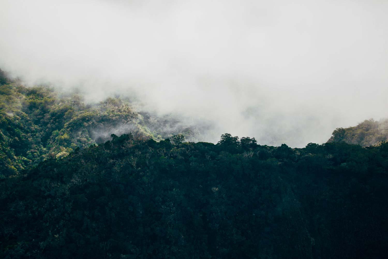 forêt luxuriante cirque La Réunion