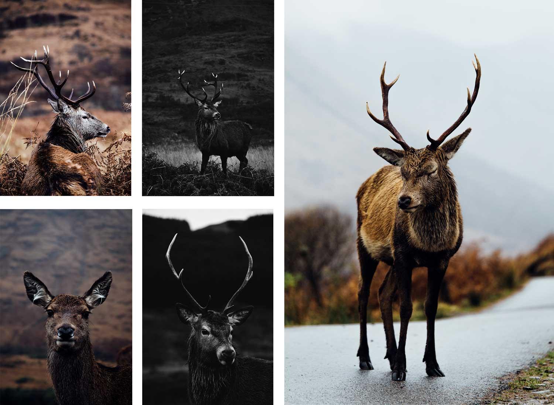 animaux en liberté Écosse glen etive