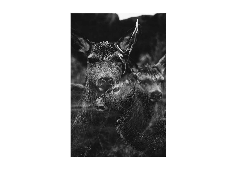 portrait animaux écosse