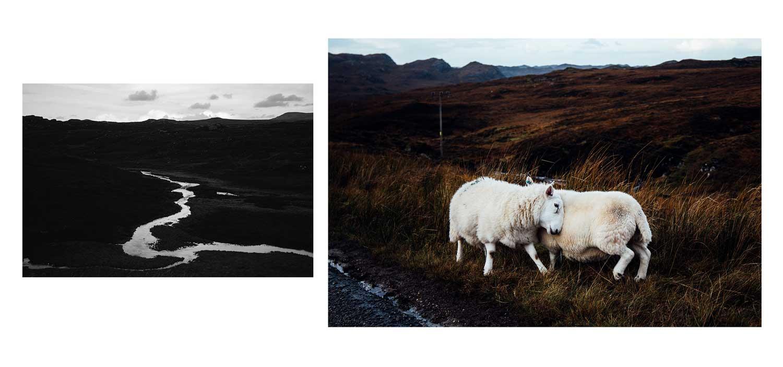 mouton écosse