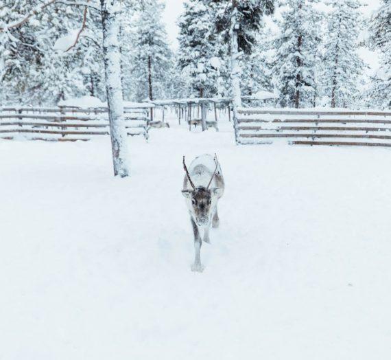 La Laponie en 15 photos — de silence et de pureté