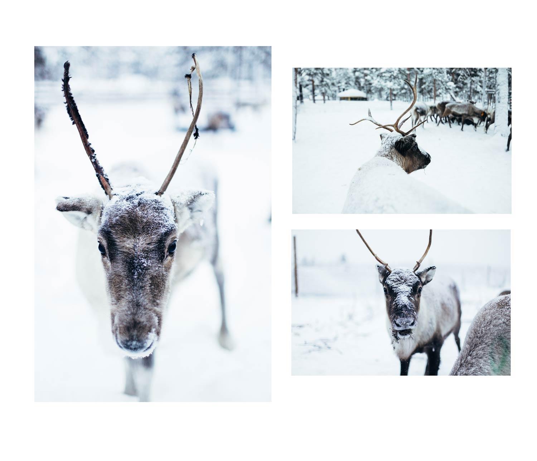 rennes laponie suédoise