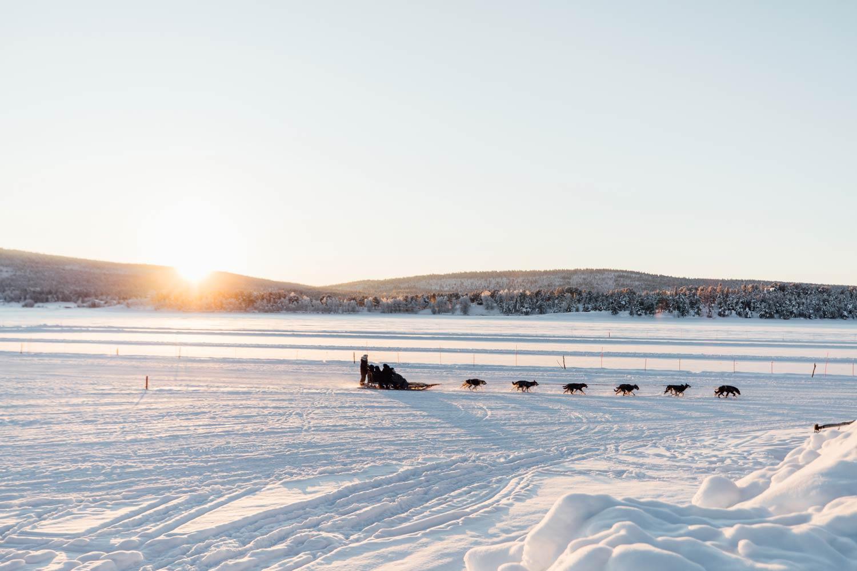traineau a chiens Laponie