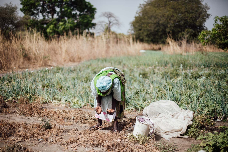 vie locale au Sénégal