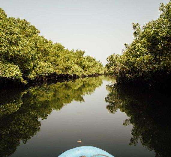 Le delta du Siné Saloum — le Sénégal au fil de l'eau