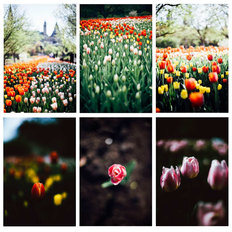 visiter Ottawa pendant le festival des tulipes