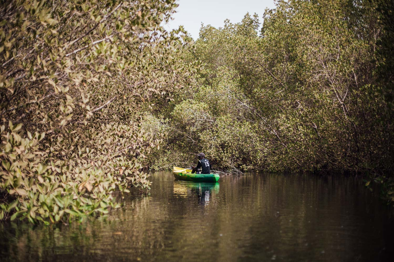 Mangrove Siné Saloum