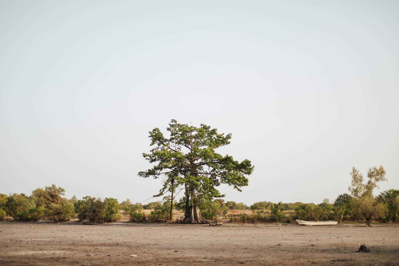 missirah baobab