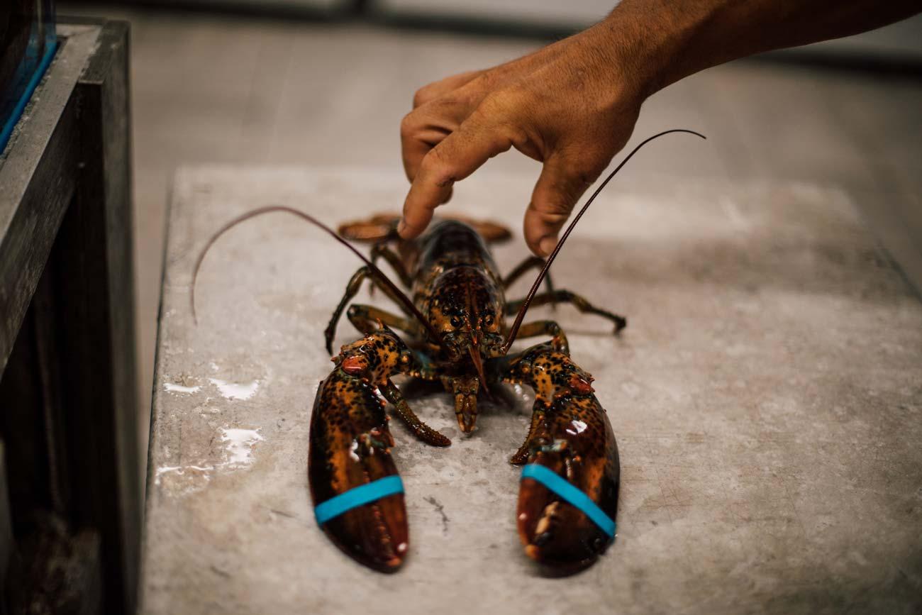 homard du nouveau brunswick-0