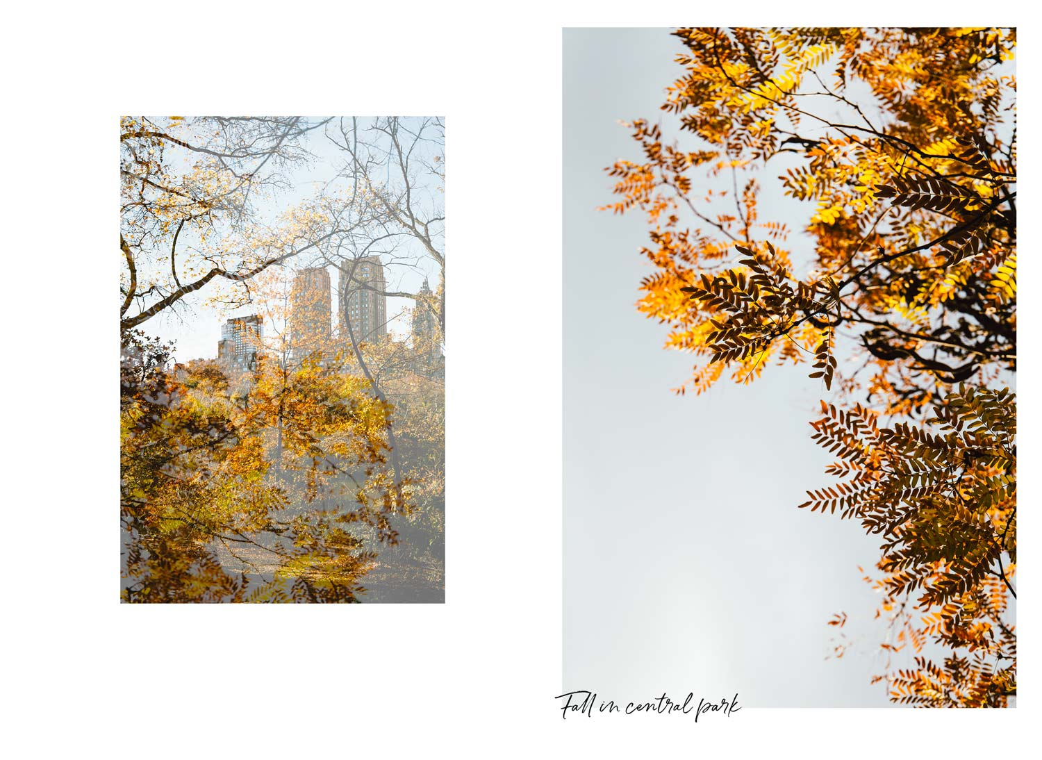 visit central park in fall
