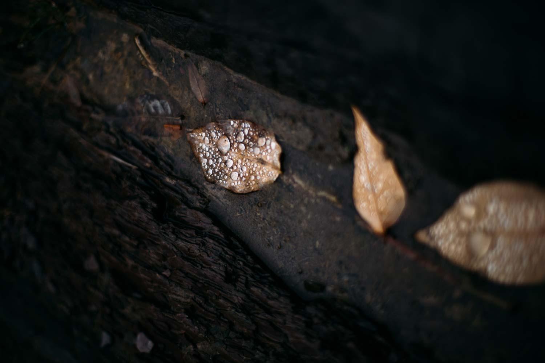 artefacts de l'automne canada