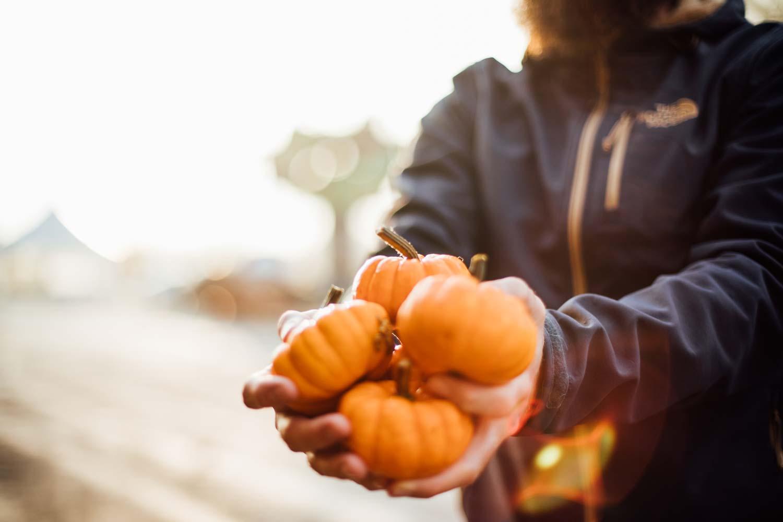 l'automne au Québec