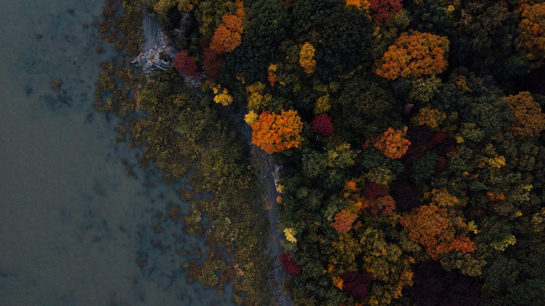 pointe-aux-pins Réserve naturelle Jean-Riopelle