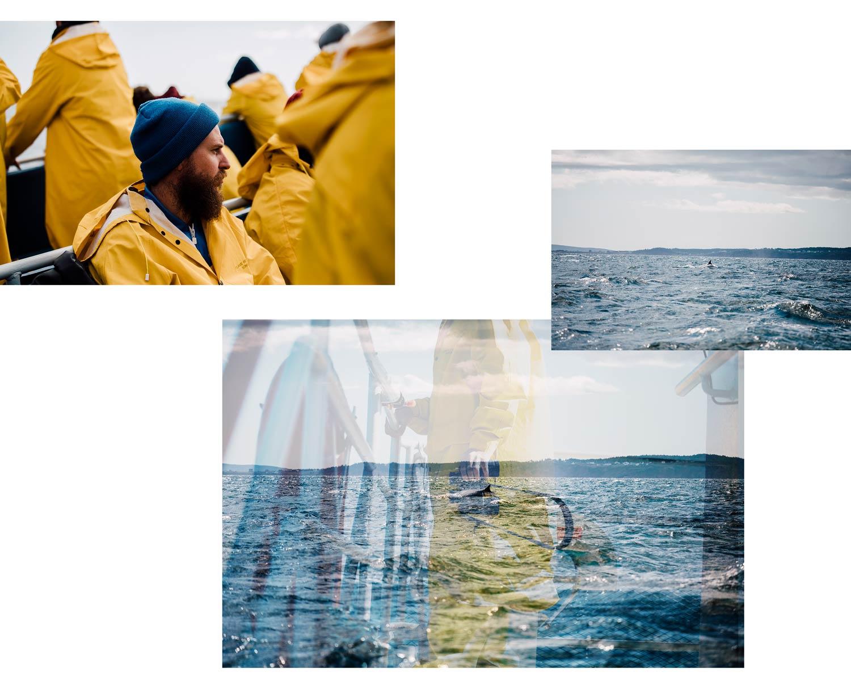 faire une croisière baleine au parc national Forillon