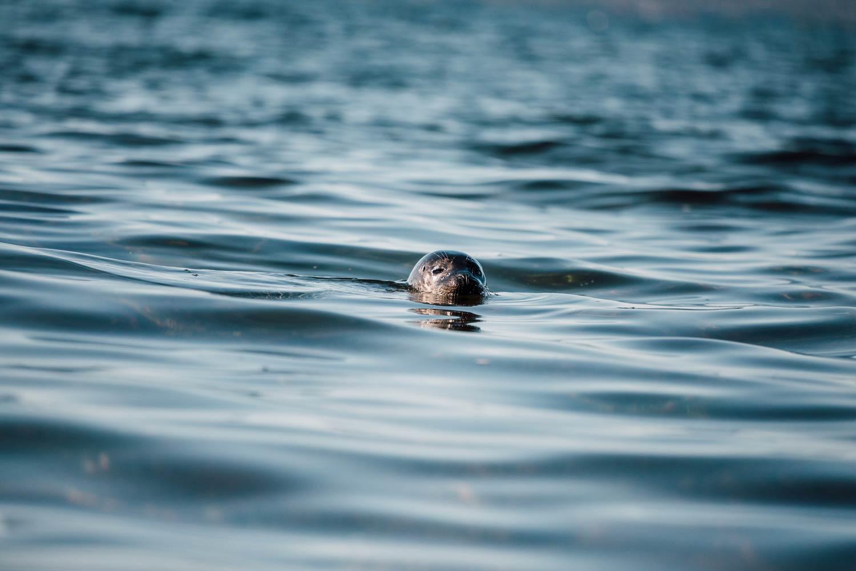 kayak voir des phoques cap aventure Forillon