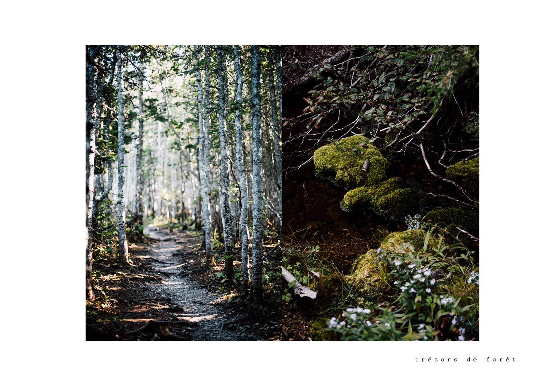 sentier randonnée Forillon