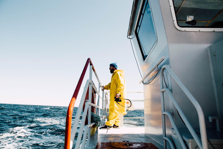 voir des baleines en Gaspésie