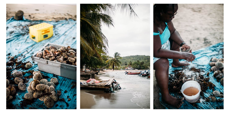 voyager dans les Antilles