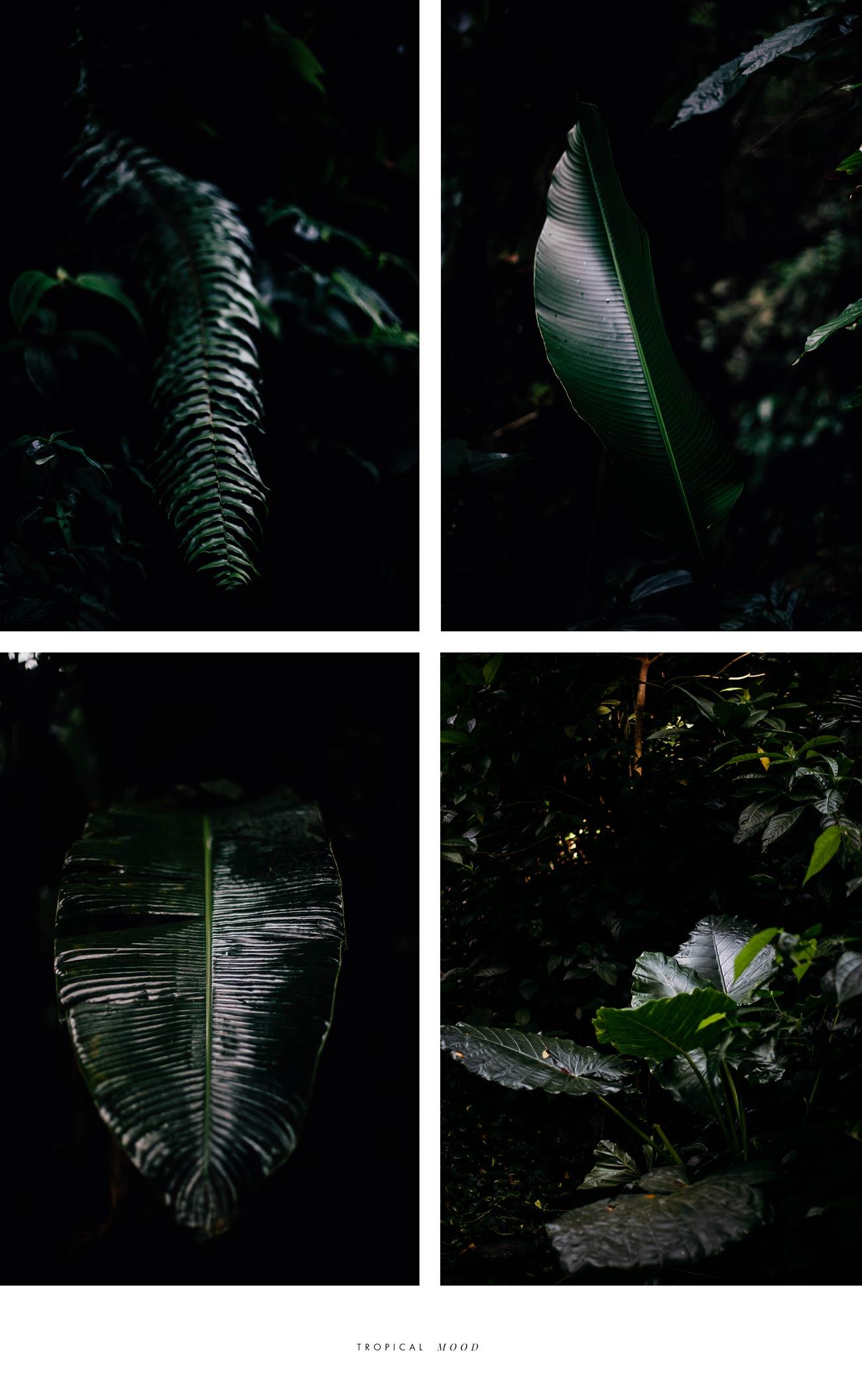 végétation Martinique blog